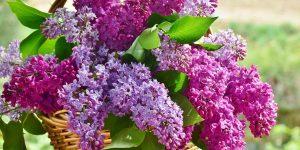 parfum aux fleurs du golfe